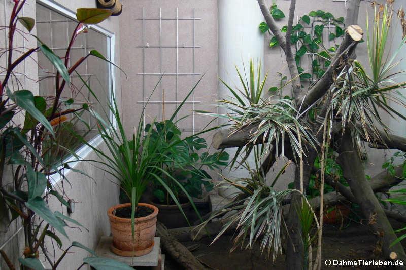 Klettergerüst Für Pflanzen : Kapitel die pflanzen u dahmstierleben