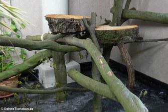 Die Baumscheiben dienen als Liege- und Futterflächen