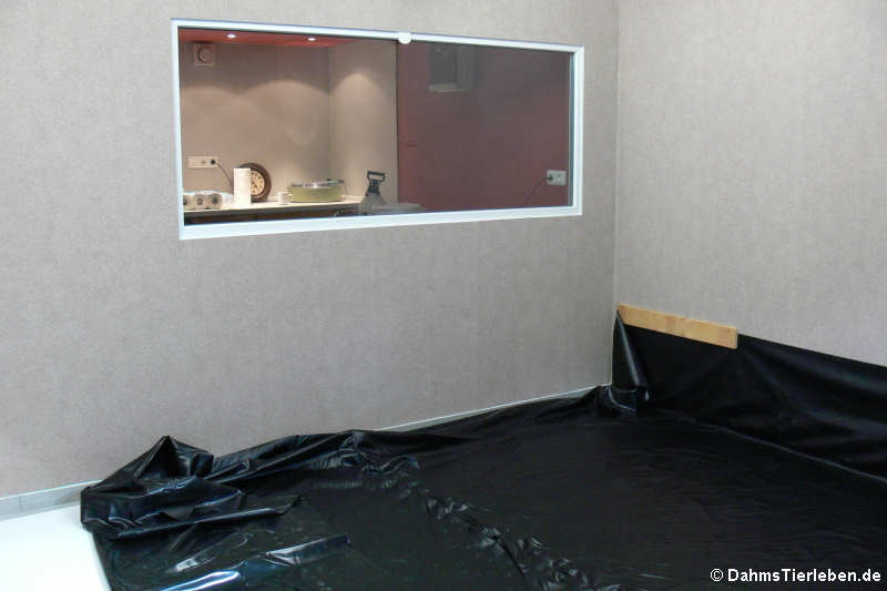 der bau eines gro terrariums f r gr ne leguane 4 10. Black Bedroom Furniture Sets. Home Design Ideas