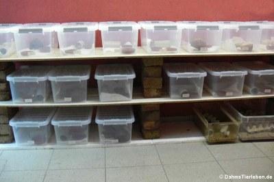 Jedes Jungtier bewohnt seine eigene Box
