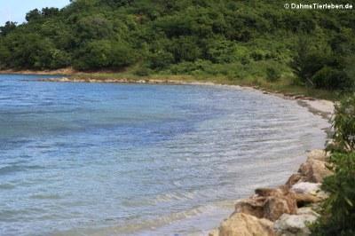 Einer von 365 Stränden auf Antigua