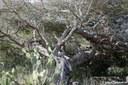 Arikok Nationalpark