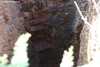 Frühere Goldmine im Arikok-Nationalpark, Aruba