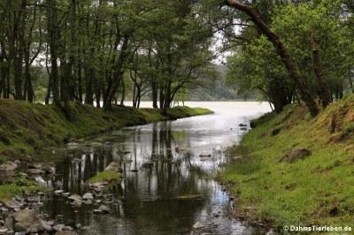 Zufluss zum See