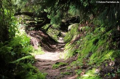 Aufstieg zum Pico do Ferro