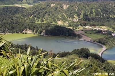 Lagoa verde