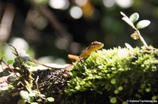 Rara Avis, Costa Rica