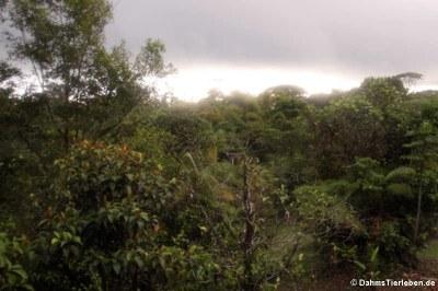 Blick in den Regenwald Rara Avis