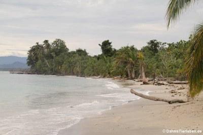 Blick auf den Strand  und ..