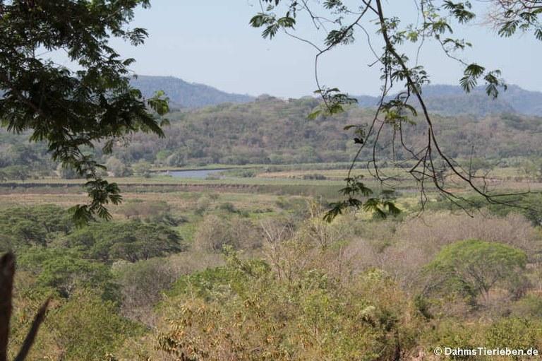Rio Tárcoles