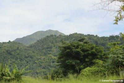 Dominica, the Nature Island