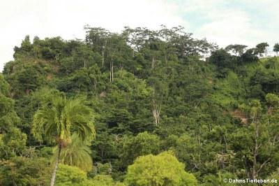 Blick auf Botanical Gardens, Roseau