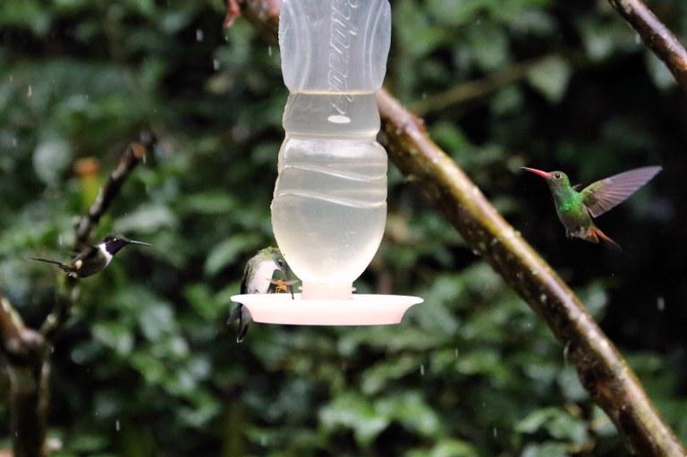 3 Kolibris an einer Futterstelle