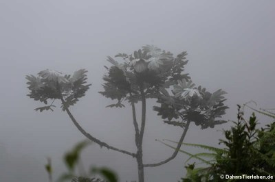 Mittendrin im Nebel