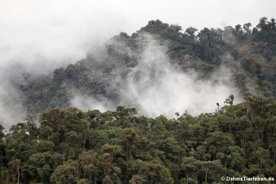 Blick auf den Nebelwald