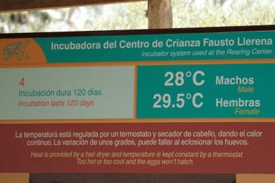 Die Inkubationstemperatur beeinflusst das Geschlecht.