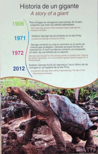 Lonesome George, die Geschichte eines Giganten