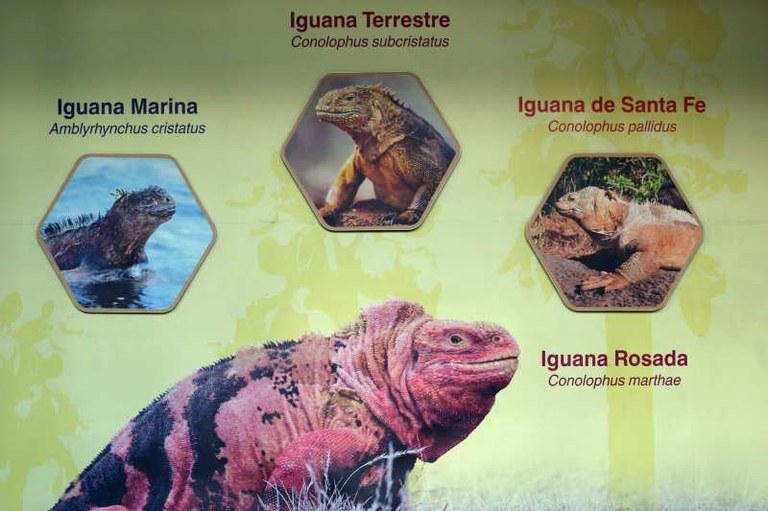 Schautafel der Leguane