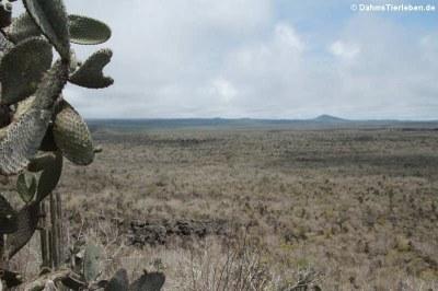 Blick in Richtung Sierra Negra