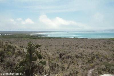 Blick auf Poza de las Diablas und Puerto Villamil