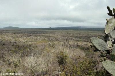 Blick in Richtung Cerro Azul