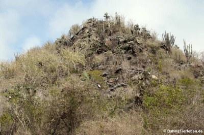 Aussichtspunkt Cerro Ochilla
