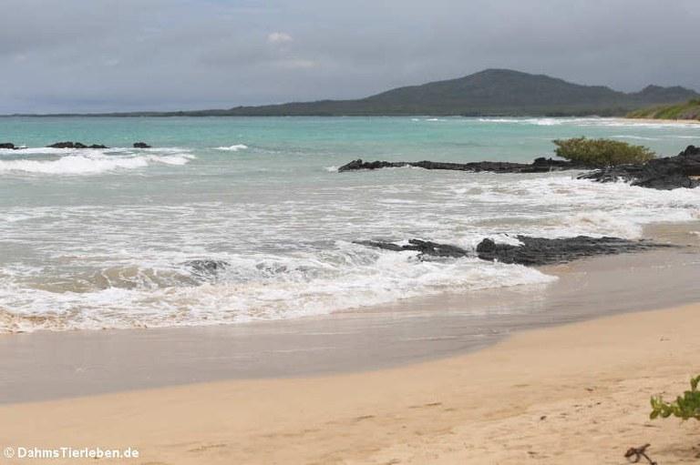 Der Strand nahe Puerto Villamil