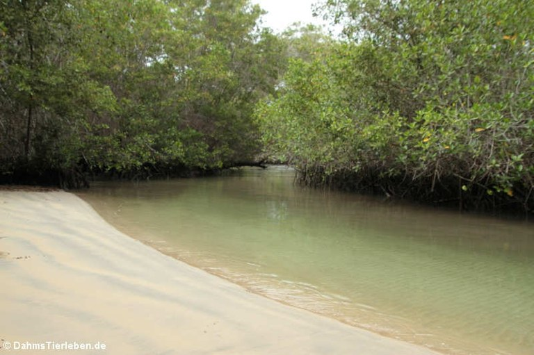 Lagune Zona de Majagua