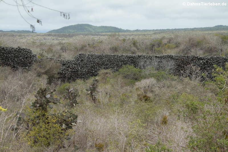 El Muro de las Lágrimas
