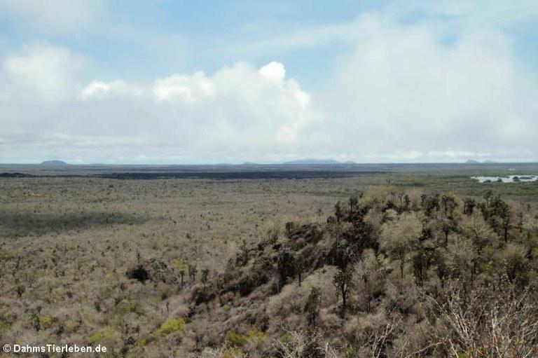 Blick vom Cerro Orchilla