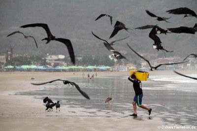 Ein Fischer versucht, den Fang vor den Vögeln in Sicherheit zu bringen