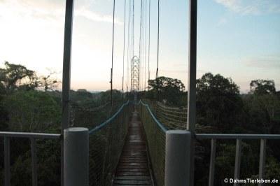 Baumwipfelbrücken (Canopywalk)
