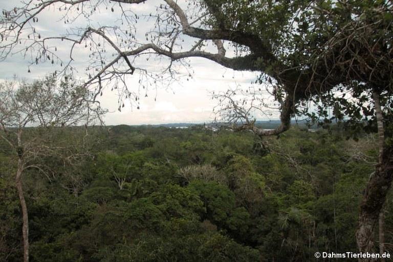 Kapokturm Ausblick