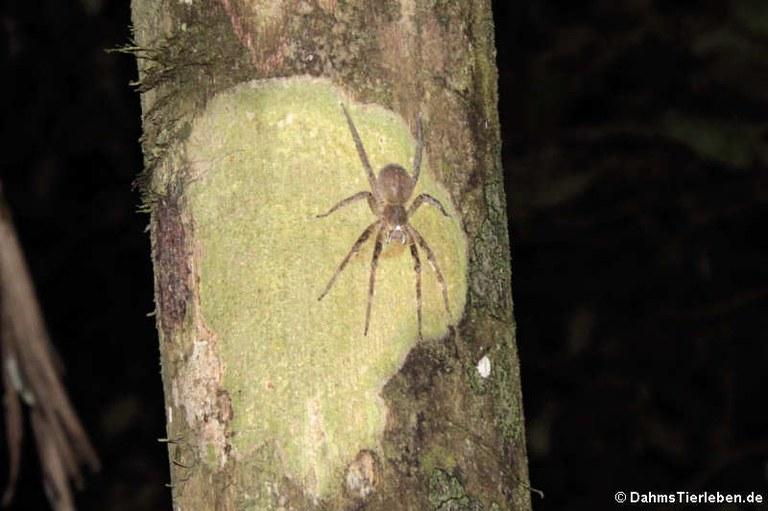 unbekannte Spinne