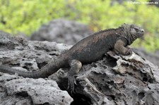 San Cristóbal, Galápagos, Ecuador