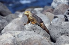 Seymour Norte, Galápagos, Ecuador