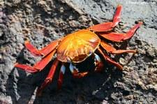 Seymour Norte (Galápagos, Ecuador)