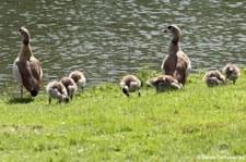 Familienausflug an Land