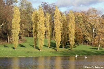 Der Kalscheurer Weiher im Herbst