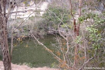 Opferbrunnen (Cenote sagrado)