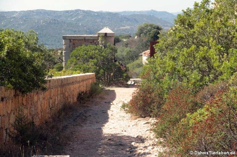 Brücke zur Festung