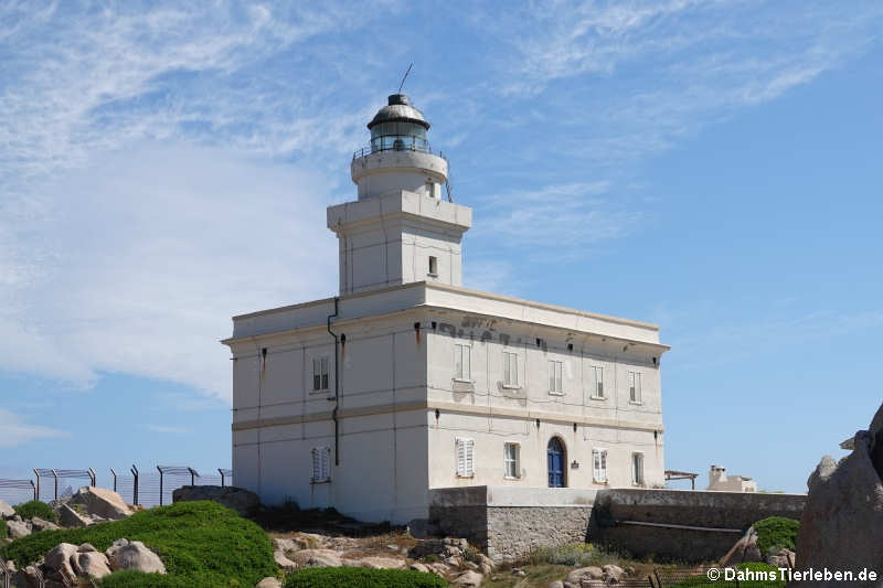 Leuchtturm auf Capo Testa
