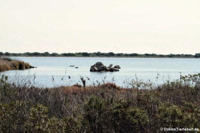 Die Lagune von San Teodoro