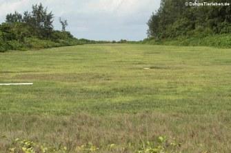 Start- und Landebahn auf Bird Island