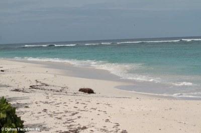 ... einsamen Strand