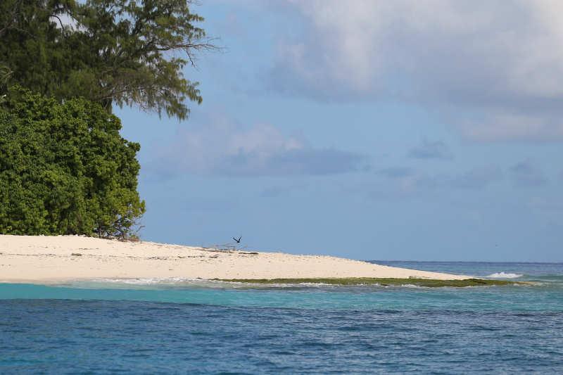 Seychellen — DahmsTierleben