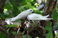 Insel Cousin, Seychellen