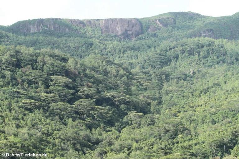 Granitfelsen im Morne Seychellois Nationalpark