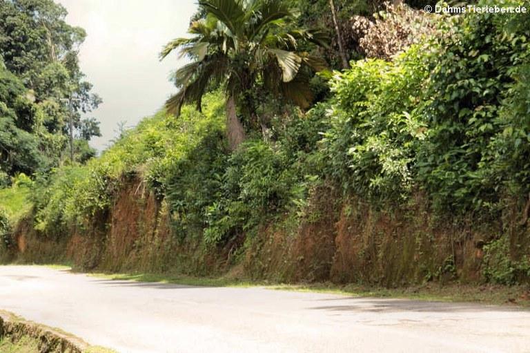 Landstrasse auf Mahé