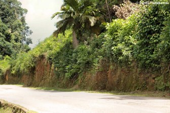 Typische Landstrasse auf Mahé